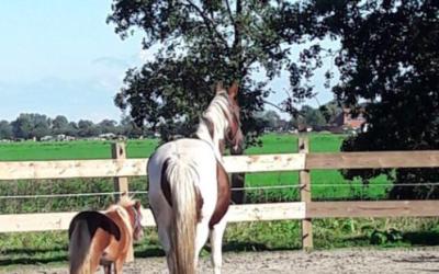 Een afrondende sessie met paarden